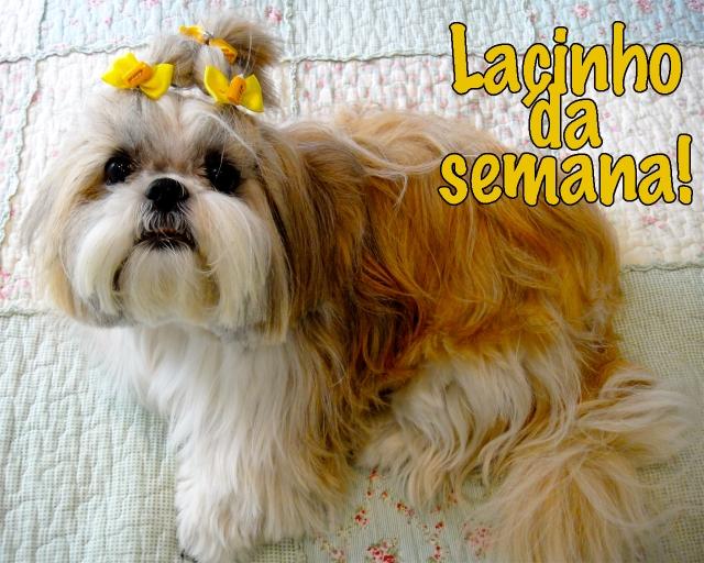 lacinho-dorinha-03-02-2013-1