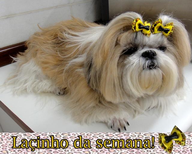 lacinho-dorinha-03-03-2013